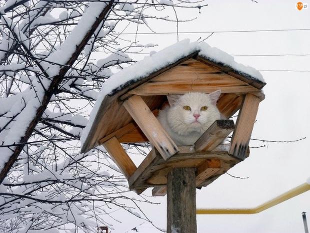 Khi các chú mèo mang thân hình hoàng thượng nhưng tâm hồn tự do hơn cả chim trời - Ảnh 17.