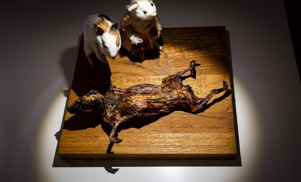 Menu rượu chưa uống đã nôn khiến thực khách khóc thét tại Bảo tàng Đồ ăn kinh tởm ở Thụy Điển - Ảnh 5.