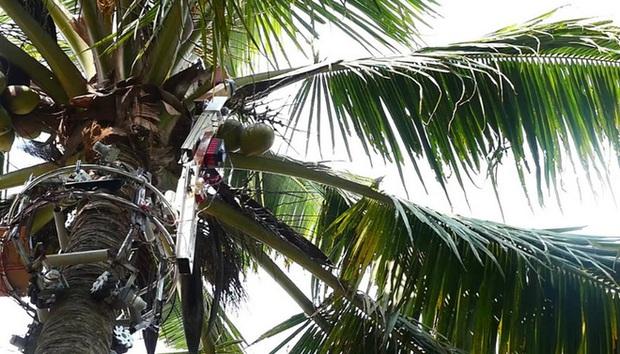 Các nhà khoa học Ấn Độ phát triển thành công robot hái dừa, năng suất thu hoạch cao hơn cả con người - Ảnh 3.