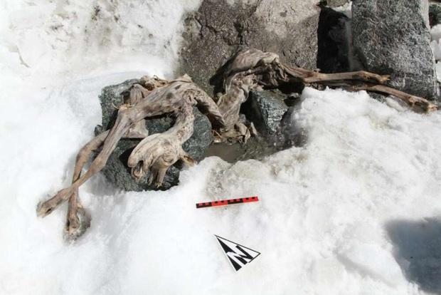 Sinh vật sẩy chân dẫn đến bị ướp đá suốt 400 năm, nay bỗng dưng trở thành anh hùng cứu tinh cho vô số xác ướp đông lạnh ngày nay - Ảnh 3.