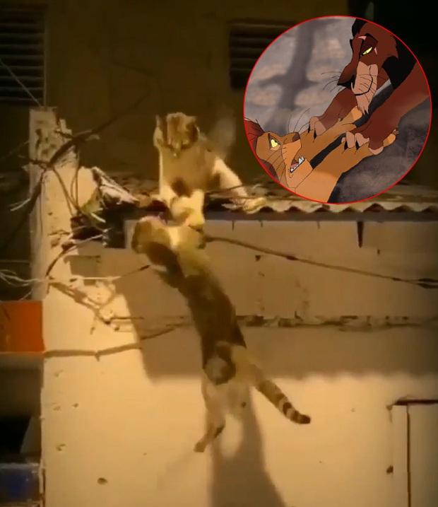 Video 2 chú mèo đánh nhau trên mái nhà vô tình cover lại cảnh phim Vua Sư Tử và gây sốt với hàng triệu lượt xem - Ảnh 3.