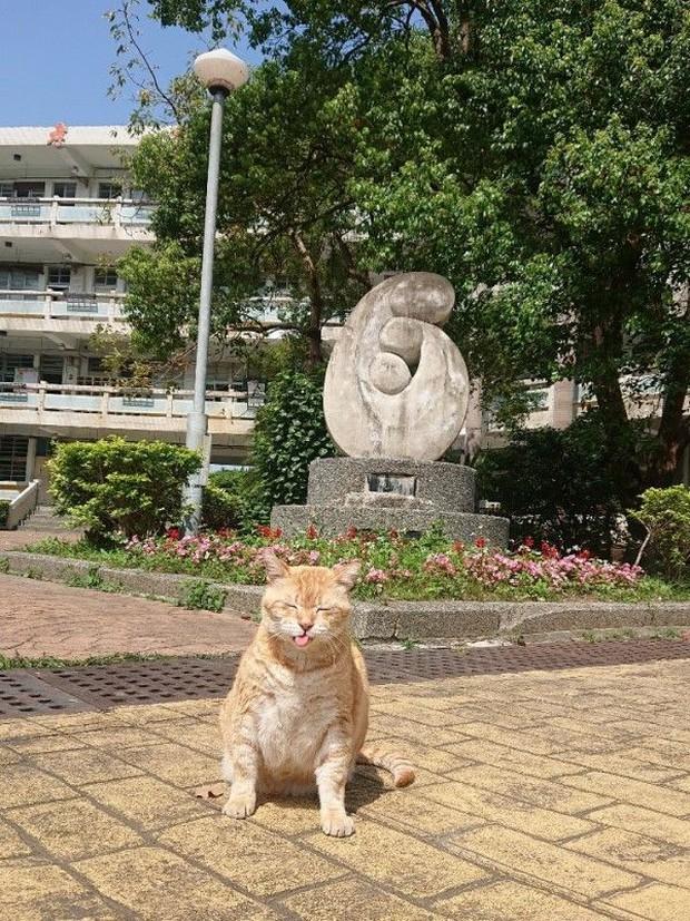 Trường cấp 2 bổ nhiệm mèo siêu mập làm hiệu phó, nhiệm vụ là ăn rồi ngủ để cả trường vuốt ve xả stress - Ảnh 1.