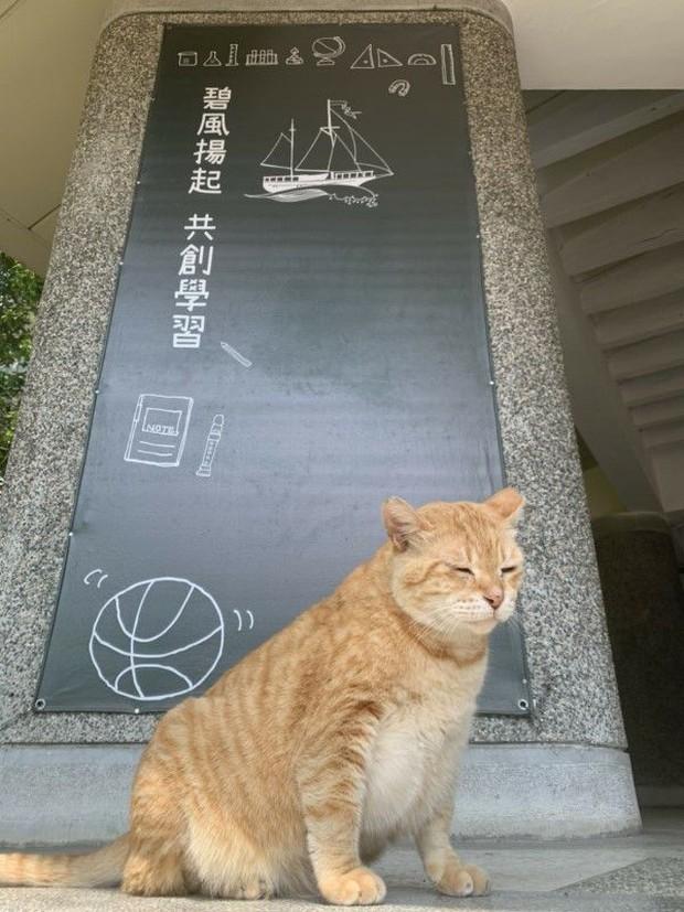 Trường cấp 2 bổ nhiệm mèo siêu mập làm hiệu phó, nhiệm vụ là ăn rồi ngủ để cả trường vuốt ve xả stress - Ảnh 2.