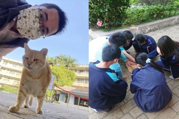 Trường cấp 2 bổ nhiệm mèo siêu mập làm hiệu phó, nhiệm vụ là ăn rồi ngủ để cả trường vuốt ve xả stress - Ảnh 4.