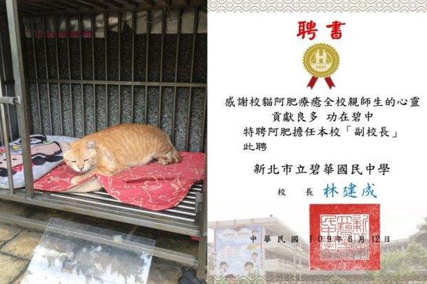 Trường cấp 2 bổ nhiệm mèo siêu mập làm hiệu phó, nhiệm vụ là ăn rồi ngủ để cả trường vuốt ve xả stress - Ảnh 6.