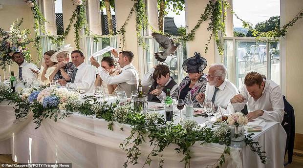 Loạt tác phẩm lọt top giải thưởng nhiếp ảnh đám cưới thế giới khiến bất cứ chị em nào cũng muốn thuê ngay về chụp 1 bộ - Ảnh 17.