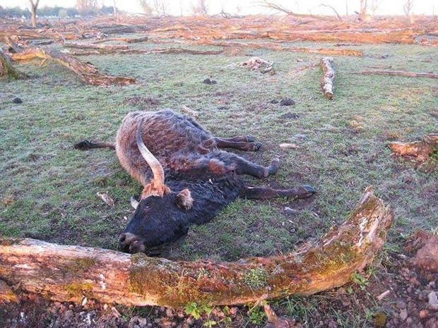 Tử địa giữa thiên đàng: Thí nghiệm phục hồi tự nhiên tại Hà Lan bỗng mang đến kết cục kinh hoàng chưa từng có, mùi vị chết chóc lan tỏa khắp nơi - Ảnh 5.