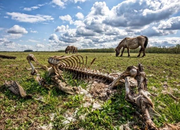 Tử địa giữa thiên đàng: Thí nghiệm phục hồi tự nhiên tại Hà Lan bỗng mang đến kết cục kinh hoàng chưa từng có, mùi vị chết chóc lan tỏa khắp nơi - Ảnh 3.
