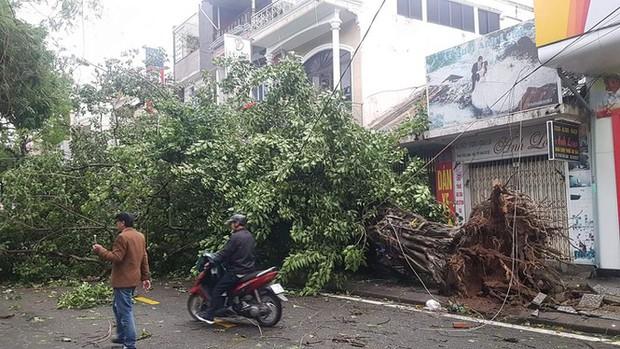 Cụ xà cừ số 13 cổ nhất tại Huế bị bão cùng tên quật đổ bật cả gốc gây tiếc nuối - Ảnh 12.