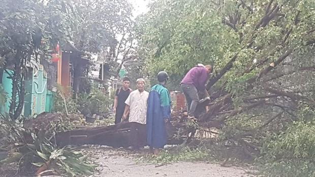Cụ xà cừ số 13 cổ nhất tại Huế bị bão cùng tên quật đổ bật cả gốc gây tiếc nuối - Ảnh 17.