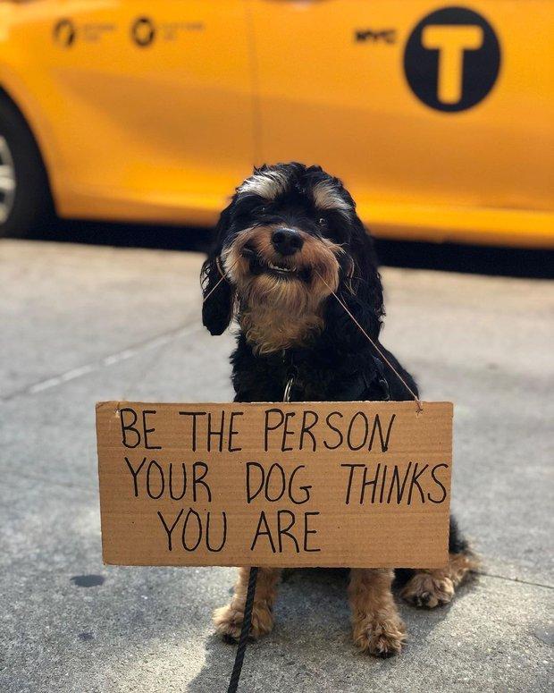 Chú chó nổi tiếng vì những thông điệp lầy lội gửi tới con người, mặt luôn hớn hở thay ngàn lời muốn nói - Ảnh 8.