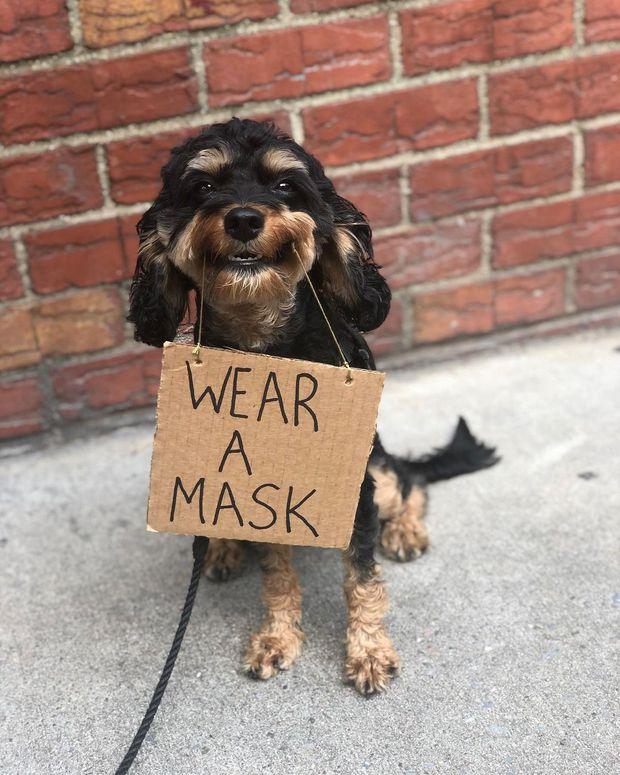 Chú chó nổi tiếng vì những thông điệp lầy lội gửi tới con người, mặt luôn hớn hở thay ngàn lời muốn nói - Ảnh 9.