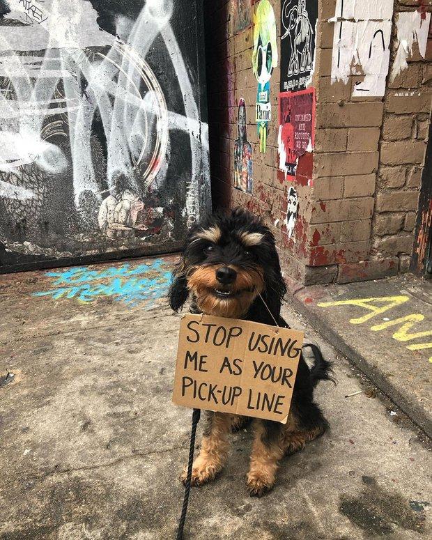Chú chó nổi tiếng vì những thông điệp lầy lội gửi tới con người, mặt luôn hớn hở thay ngàn lời muốn nói - Ảnh 1.