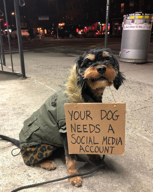 Chú chó nổi tiếng vì những thông điệp lầy lội gửi tới con người, mặt luôn hớn hở thay ngàn lời muốn nói - Ảnh 2.