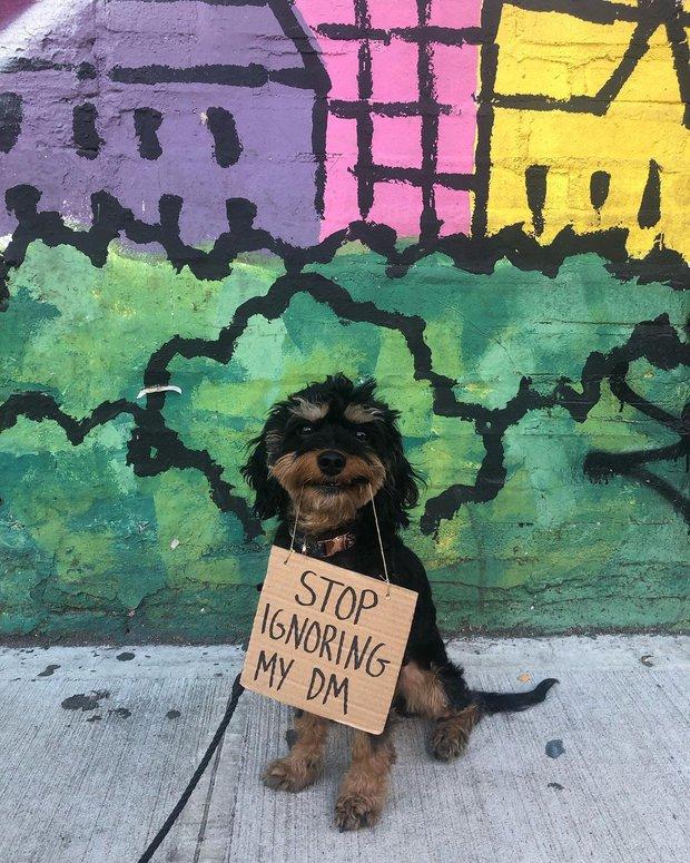 Chú chó nổi tiếng vì những thông điệp lầy lội gửi tới con người, mặt luôn hớn hở thay ngàn lời muốn nói - Ảnh 3.