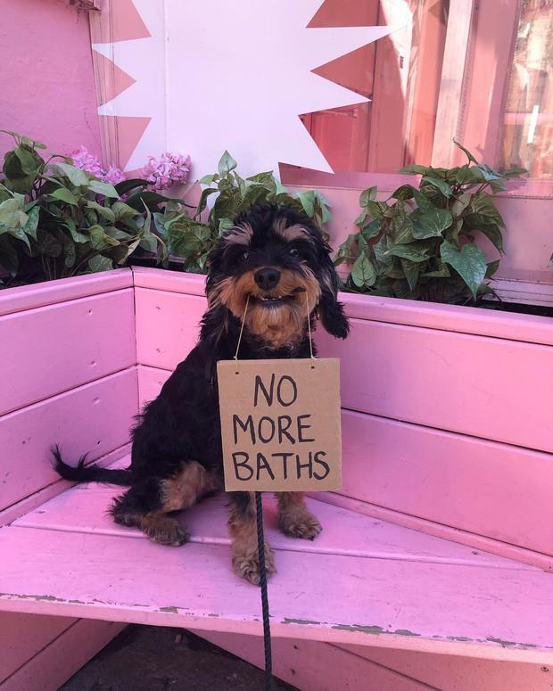 Chú chó nổi tiếng vì những thông điệp lầy lội gửi tới con người, mặt luôn hớn hở thay ngàn lời muốn nói - Ảnh 4.