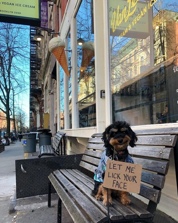 Chú chó nổi tiếng vì những thông điệp lầy lội gửi tới con người, mặt luôn hớn hở thay ngàn lời muốn nói - Ảnh 6.