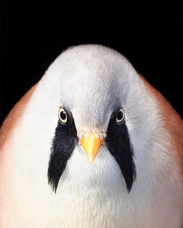 Đầu cắt moi đến râu quai nón - chùm ảnh chân dung cực nghệ của một số loài chim siêu hiếm có khó tìm - Ảnh 2.