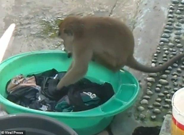 Chủ nhà há hốc mồm kinh ngạc sau khi phát hiện cô tiên xuất hiện giặt giũ hộ mình - Ảnh 1.