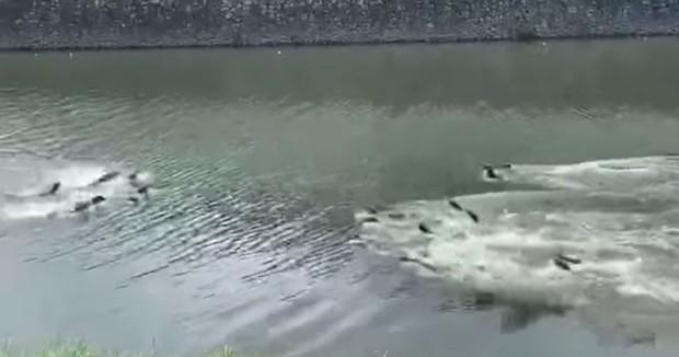 Hai nhà rái cá đánh nhau như phim hành động suốt 5 năm ròng, phân chia quyền lực mãi chưa hết - Ảnh 3.