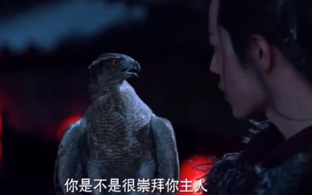 Lang Điện Hạ vướng phốt mang chim quý hiếm thuộc diện sách đỏ đi đóng phim - Ảnh 7.