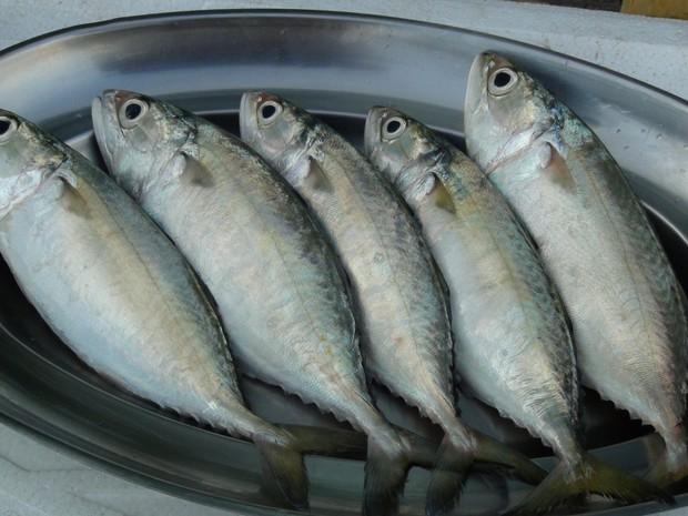 5 loại cá có khả năng biến thành độc dược, được khuyên nên ăn ít kẻo ung thư tìm đến - Ảnh 4.