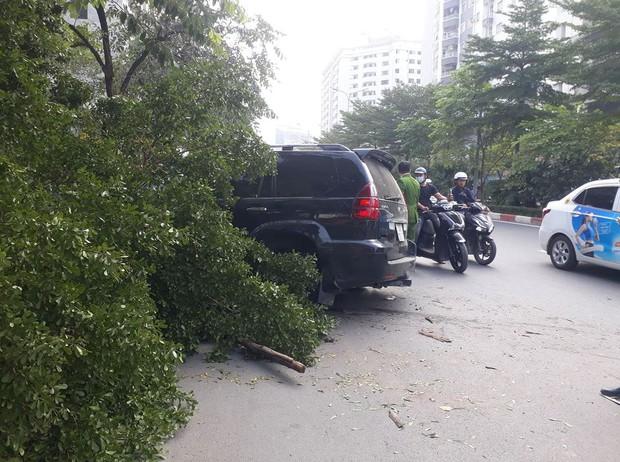 Xe Lexus gây tai nạn liên hoàn rồi húc đổ gốc cây bên đường, tài xế gãi đầu hỏi Có sao không? - Ảnh 2.