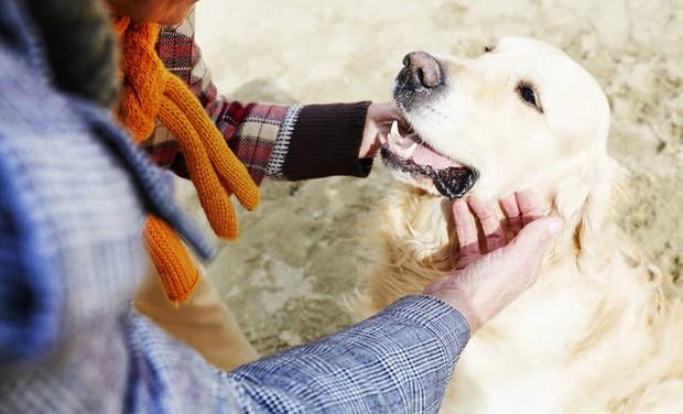 Câu chuyện cảm động về những chú chó trung thành nhất mọi thời đại khiến hàng triệu người không cầm được nước mắt - Ảnh 2.