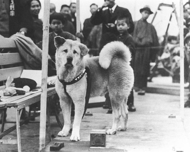 Câu chuyện cảm động về những chú chó trung thành nhất mọi thời đại khiến hàng triệu người không cầm được nước mắt - Ảnh 1.