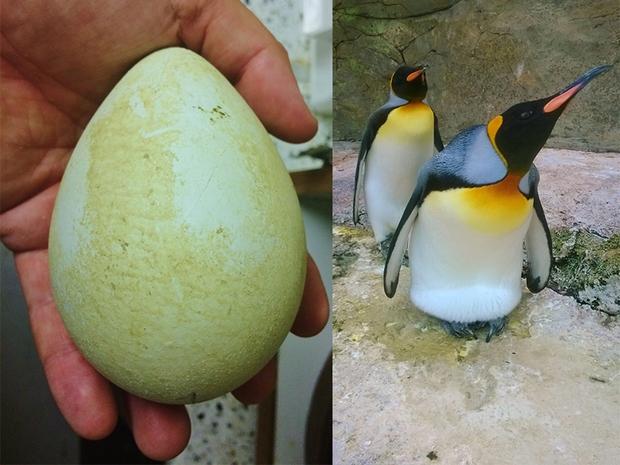 """Hiếm người biết trứng chim cánh cụt từng được xem là """"đặc sản"""" trước khi chính thức bị cấm ăn trên toàn thế giới - Ảnh 1."""