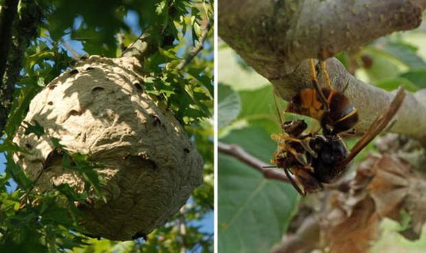 Lần đầu tiên trong lịch sử khoa học chứng kiến loài ong biết dùng công cụ, nhưng họ lại cảm thấy... buồn nôn - Ảnh 4.