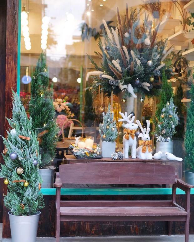 Cây Giáng sinh, vòng nguyệt quế tươi ở Sài Gòn: Từ 200k - 3,5 triệu, nhìn chỉ muốn mua hết - Ảnh 4.