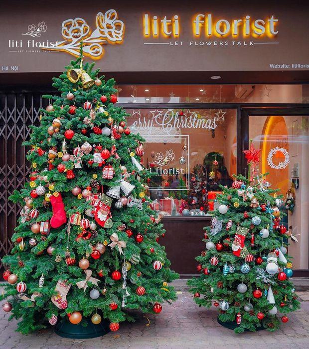 Cây Giáng sinh, vòng nguyệt quế tươi ở Sài Gòn: Từ 200k - 3,5 triệu, nhìn chỉ muốn mua hết - Ảnh 7.