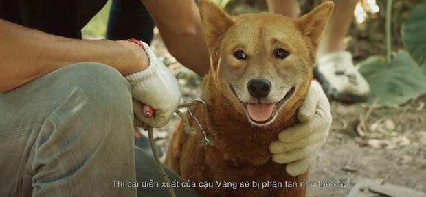 Bé cún Cậu Vàng diễn đến hăng say trên phim trường, được Lão Hạc và cả ekip cưng yêu hết sức - Ảnh 8.