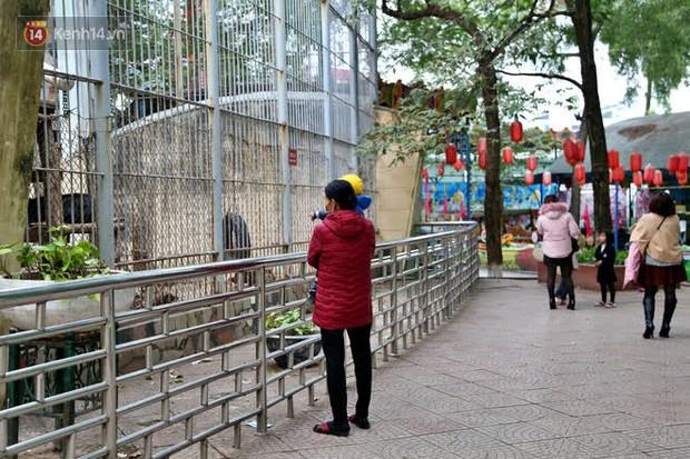 """Ảnh: Động vật tại vườn bách thú Thủ Lệ co ro, ủ rũ trong cái lạnh """"thấu xương"""" ở Thủ đô - Ảnh 2."""