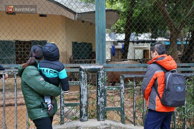 """Ảnh: Động vật tại vườn bách thú Thủ Lệ co ro, ủ rũ trong cái lạnh """"thấu xương"""" ở Thủ đô - Ảnh 16."""