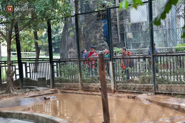 """Ảnh: Động vật tại vườn bách thú Thủ Lệ co ro, ủ rũ trong cái lạnh """"thấu xương"""" ở Thủ đô - Ảnh 13."""