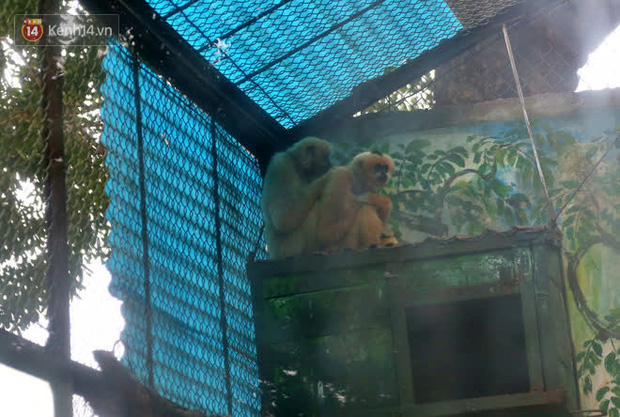 """Ảnh: Động vật tại vườn bách thú Thủ Lệ co ro, ủ rũ trong cái lạnh """"thấu xương"""" ở Thủ đô - Ảnh 8."""