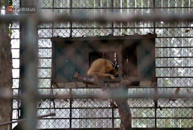 """Ảnh: Động vật tại vườn bách thú Thủ Lệ co ro, ủ rũ trong cái lạnh """"thấu xương"""" ở Thủ đô - Ảnh 11."""
