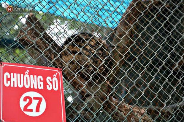 """Ảnh: Động vật tại vườn bách thú Thủ Lệ co ro, ủ rũ trong cái lạnh """"thấu xương"""" ở Thủ đô - Ảnh 9."""