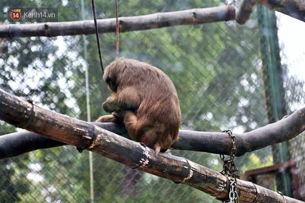 """Ảnh: Động vật tại vườn bách thú Thủ Lệ co ro, ủ rũ trong cái lạnh """"thấu xương"""" ở Thủ đô - Ảnh 1."""