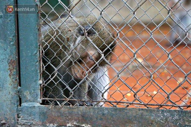 """Ảnh: Động vật tại vườn bách thú Thủ Lệ co ro, ủ rũ trong cái lạnh """"thấu xương"""" ở Thủ đô - Ảnh 10."""