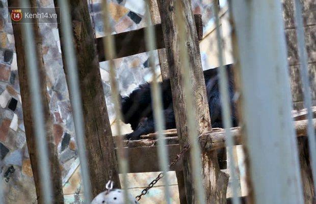 """Ảnh: Động vật tại vườn bách thú Thủ Lệ co ro, ủ rũ trong cái lạnh """"thấu xương"""" ở Thủ đô - Ảnh 12."""