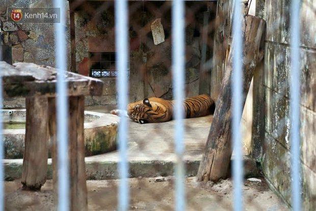 """Ảnh: Động vật tại vườn bách thú Thủ Lệ co ro, ủ rũ trong cái lạnh """"thấu xương"""" ở Thủ đô - Ảnh 3."""