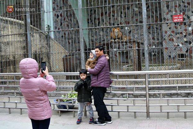 """Ảnh: Động vật tại vườn bách thú Thủ Lệ co ro, ủ rũ trong cái lạnh """"thấu xương"""" ở Thủ đô - Ảnh 4."""