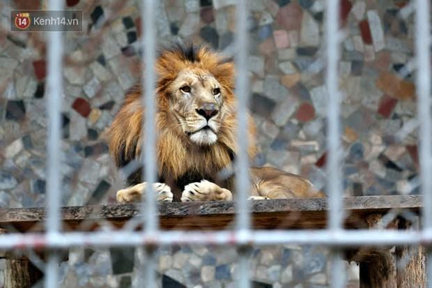 """Ảnh: Động vật tại vườn bách thú Thủ Lệ co ro, ủ rũ trong cái lạnh """"thấu xương"""" ở Thủ đô - Ảnh 5."""
