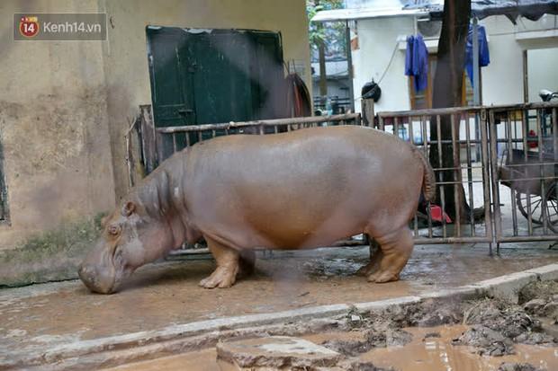 """Ảnh: Động vật tại vườn bách thú Thủ Lệ co ro, ủ rũ trong cái lạnh """"thấu xương"""" ở Thủ đô - Ảnh 14."""