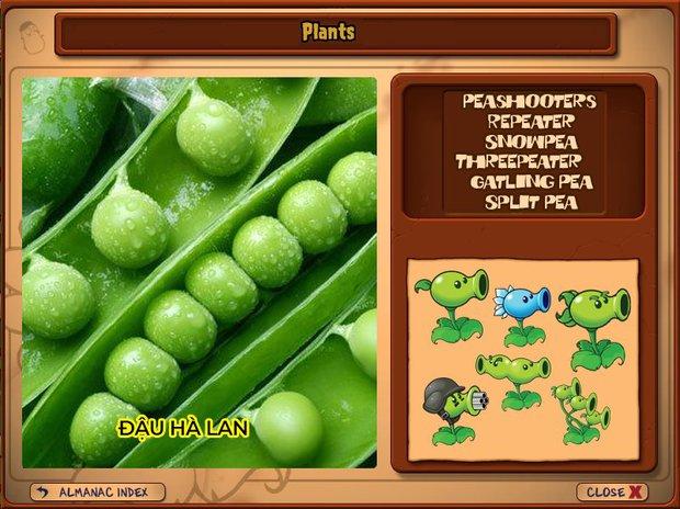 Nhà ai cũng 3 đời cày Plants vs Zombies nhưng chẳng ai biết hết những loại cây trong game này! - Ảnh 2.