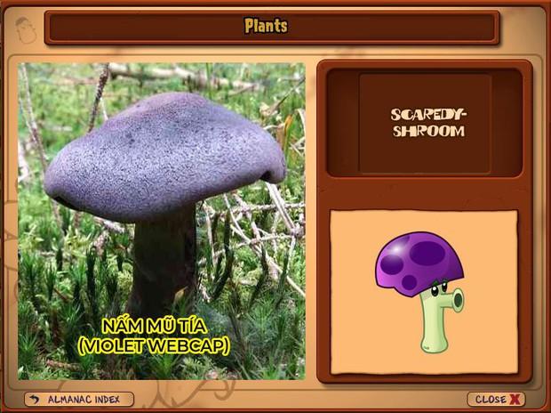 Nhà ai cũng 3 đời cày Plants vs Zombies nhưng chẳng ai biết hết những loại cây trong game này! - Ảnh 13.