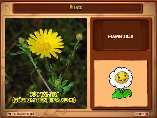 Nhà ai cũng 3 đời cày Plants vs Zombies nhưng chẳng ai biết hết những loại cây trong game này! - Ảnh 20.